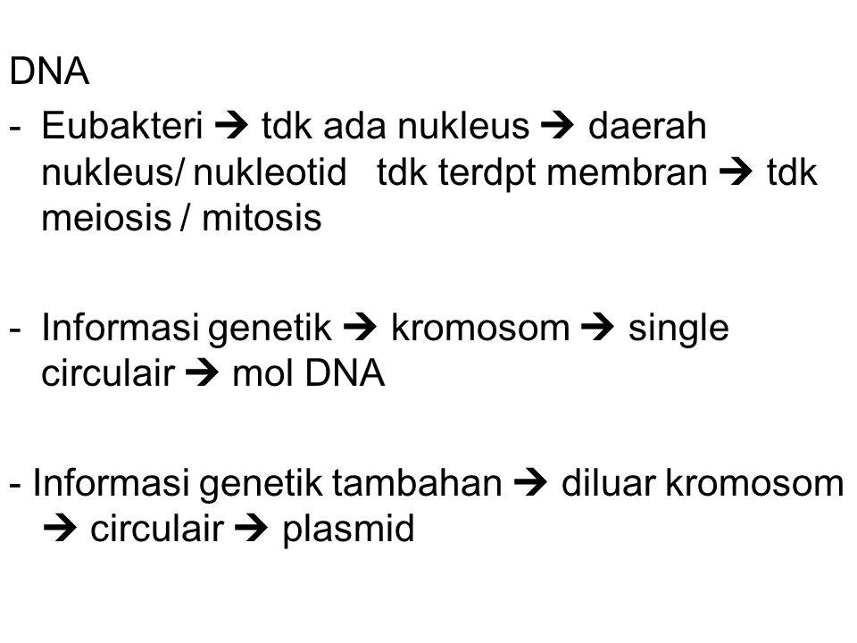 DNA Eubakteri  tdk ada nukleus  daerah nukleus/ nukleotid tdk terdpt membran  tdk meiosis / mitosis.