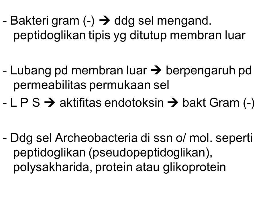 - Bakteri gram (-)  ddg sel mengand