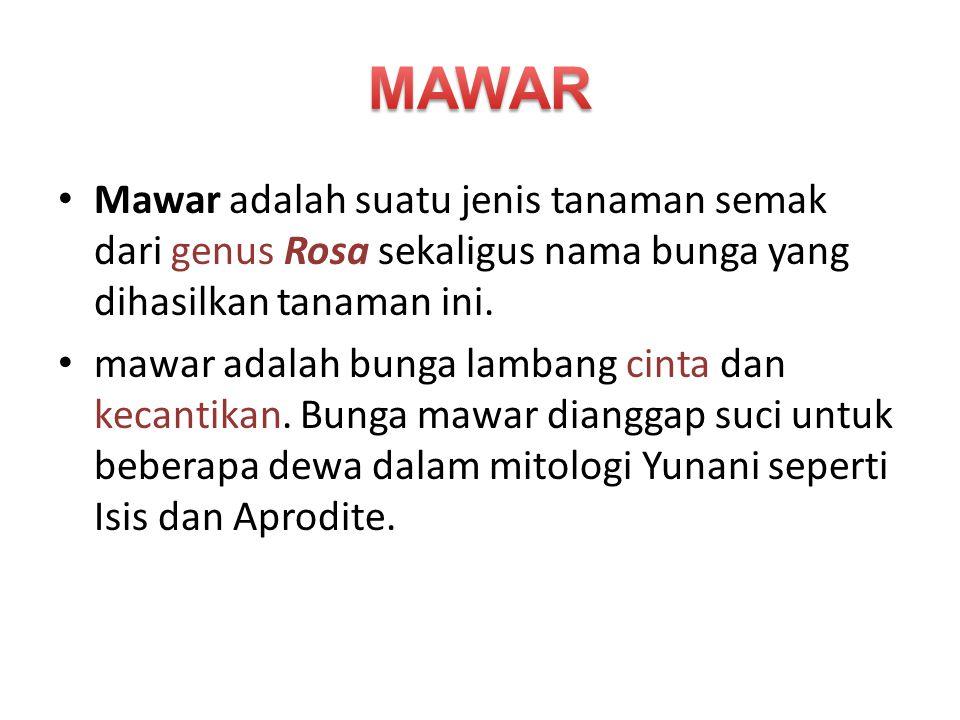MAWAR Mawar adalah suatu jenis tanaman semak dari genus Rosa sekaligus nama bunga yang dihasilkan tanaman ini.