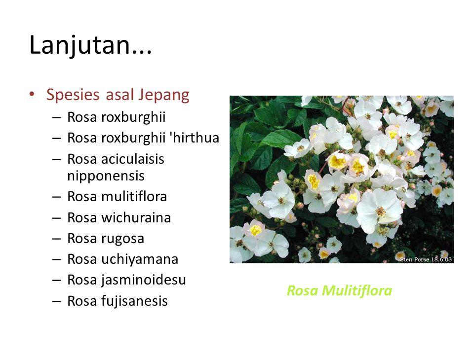 Lanjutan... Spesies asal Jepang Rosa roxburghii