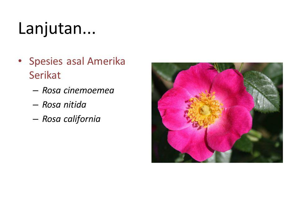 Lanjutan... Spesies asal Amerika Serikat Rosa cinemoemea Rosa nitida