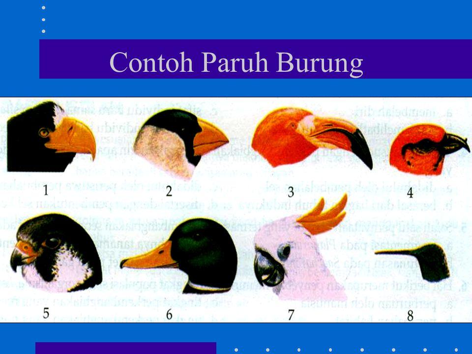 Contoh Paruh Burung