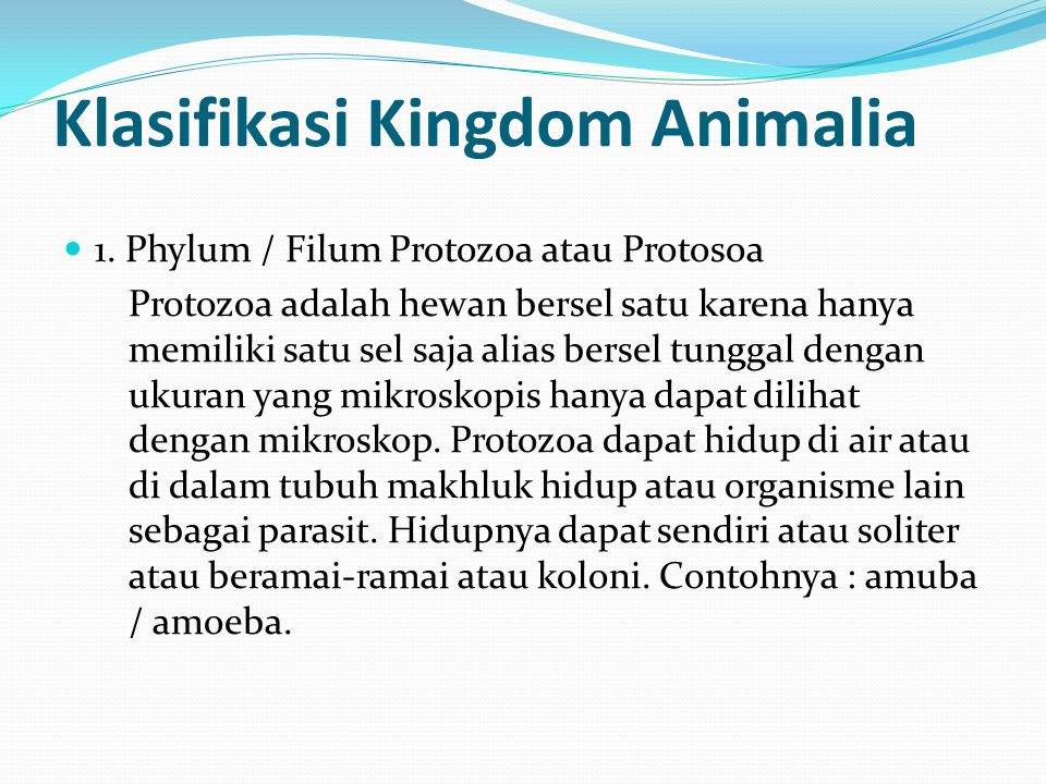 Klasifikasi Kingdom Animalia
