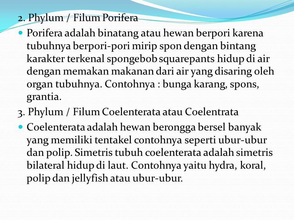 2. Phylum / Filum Porifera
