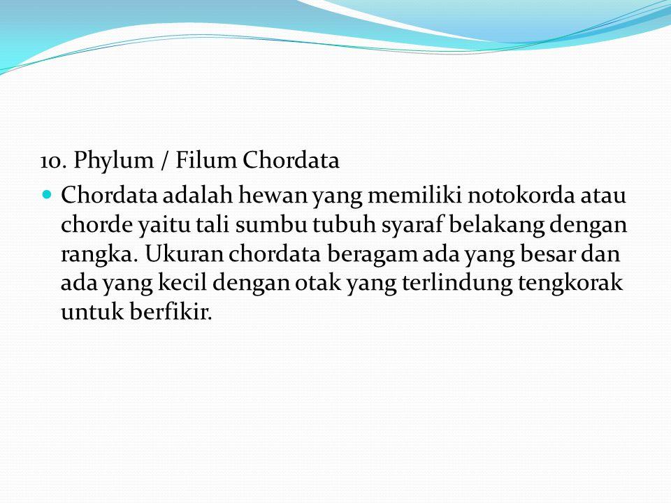 10. Phylum / Filum Chordata