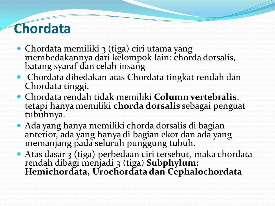 Chordata Chordata memiliki 3 (tiga) ciri utama yang membedakannya dari kelompok lain: chorda dorsalis, batang syaraf dan celah insang.