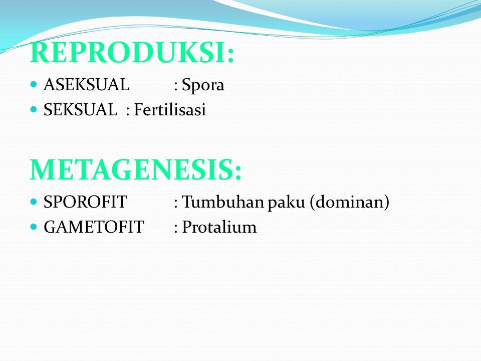 REPRODUKSI: METAGENESIS: ASEKSUAL : Spora SEKSUAL : Fertilisasi