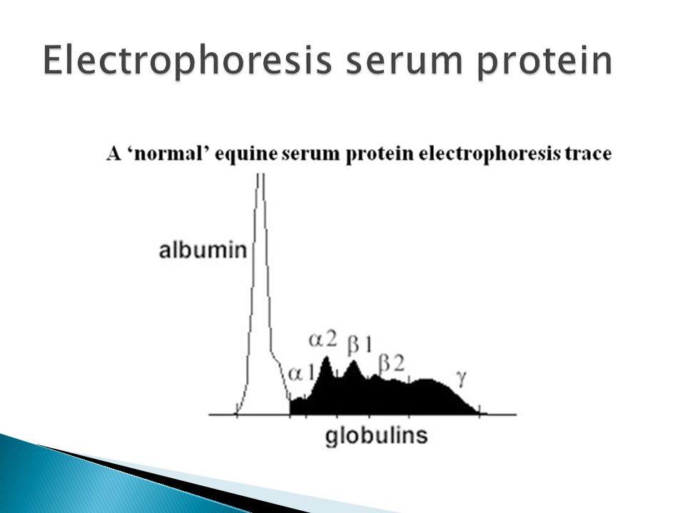 Electrophoresis serum protein