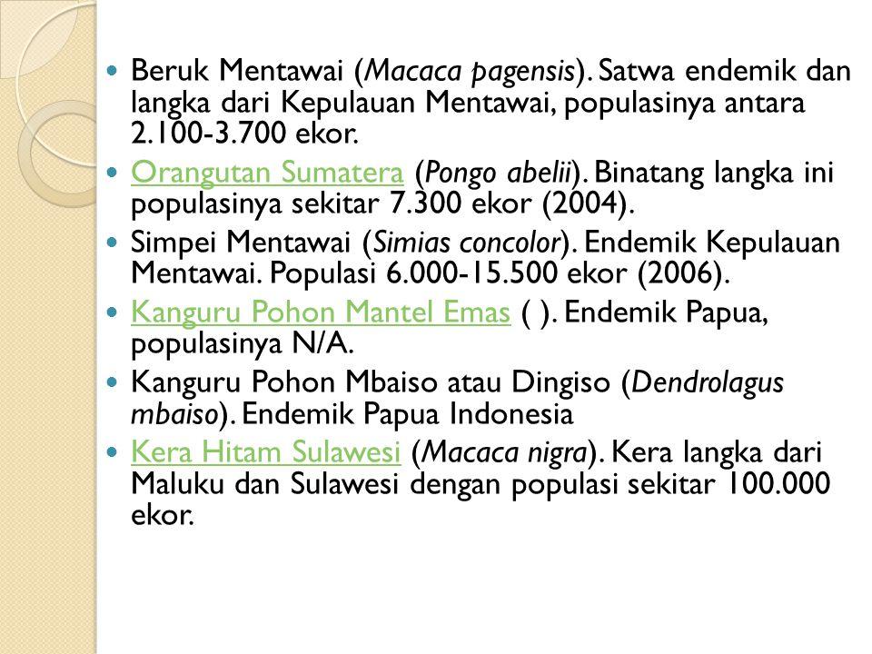 Beruk Mentawai (Macaca pagensis)