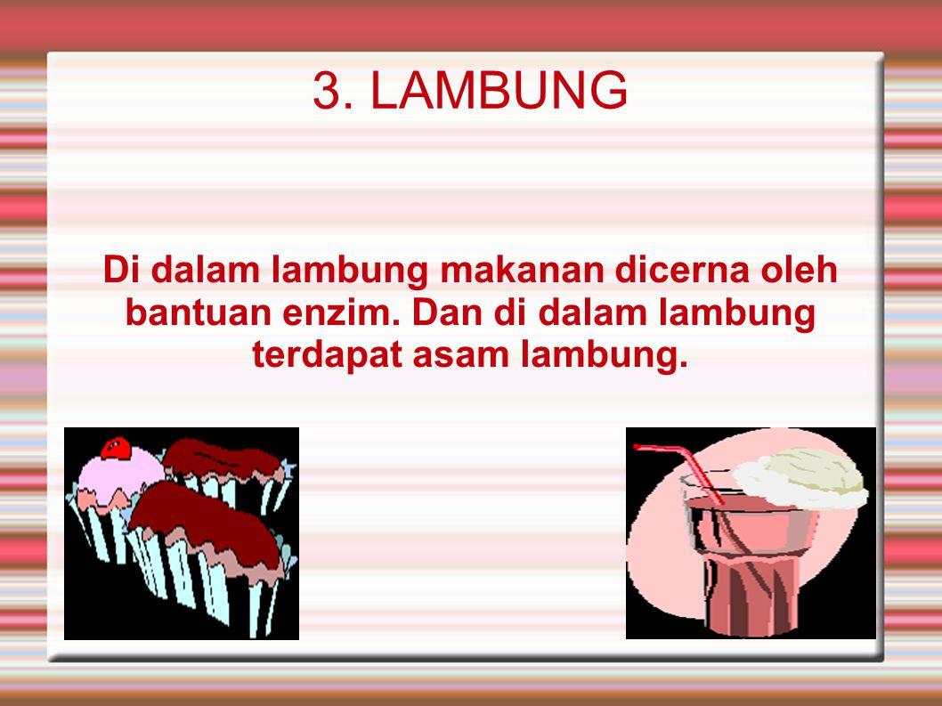 3. LAMBUNG Di dalam lambung makanan dicerna oleh bantuan enzim.