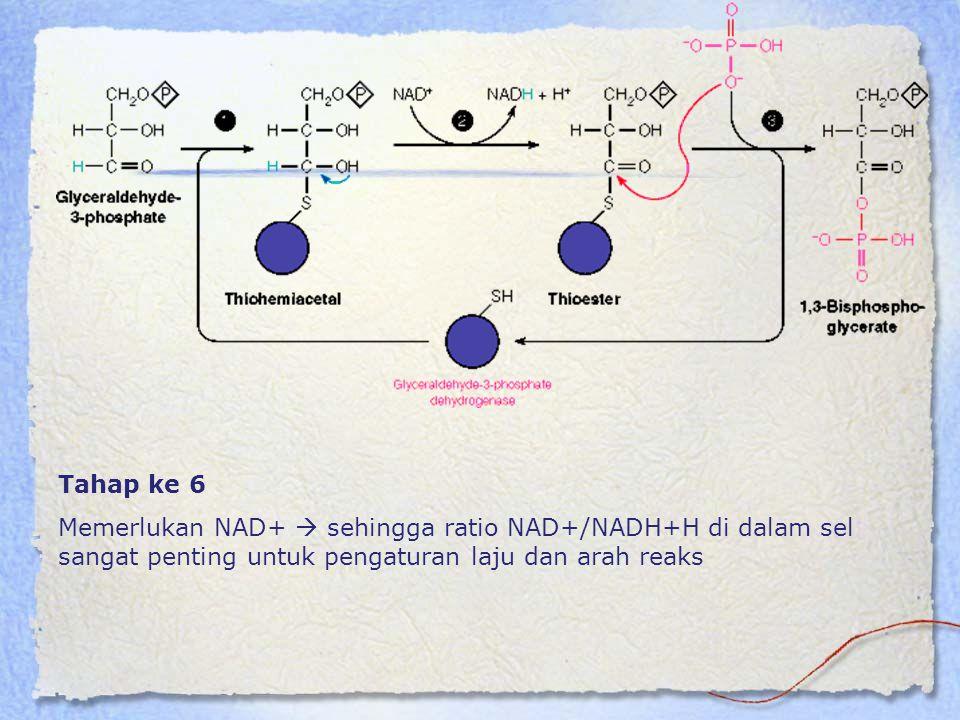 Tahap ke 6 Memerlukan NAD+  sehingga ratio NAD+/NADH+H di dalam sel sangat penting untuk pengaturan laju dan arah reaks.