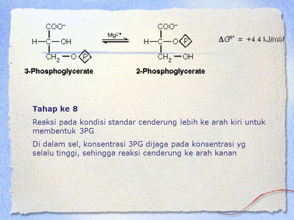 Tahap ke 8 Reaksi pada kondisi standar cenderung lebih ke arah kiri untuk membentuk 3PG.
