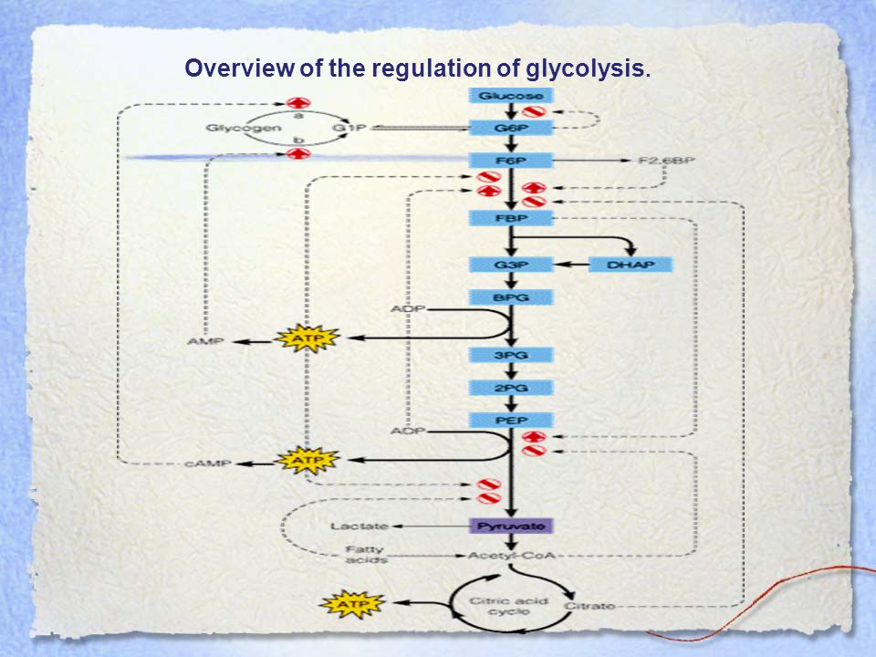 Overview of the regulation of glycolysis.