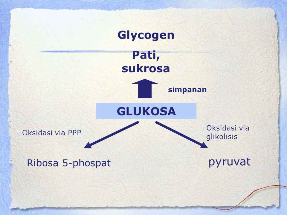 Glycogen Pati, sukrosa GLUKOSA