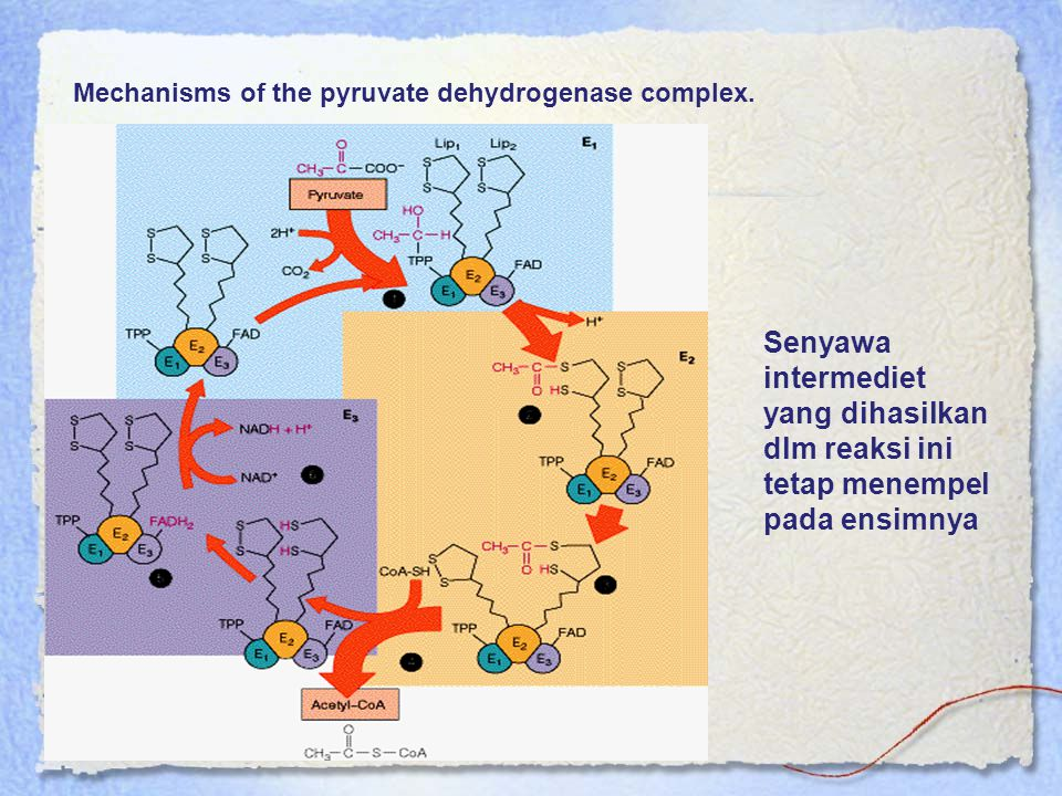 Mechanisms of the pyruvate dehydrogenase complex.