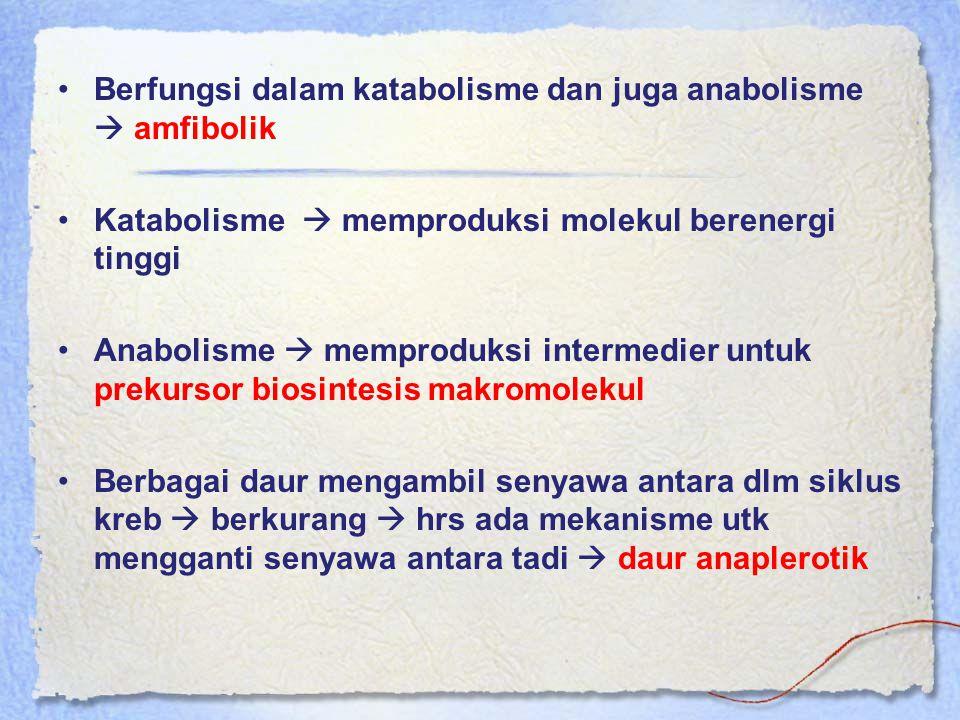 Berfungsi dalam katabolisme dan juga anabolisme  amfibolik