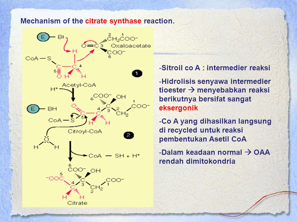 Mechanism of the citrate synthase reaction.