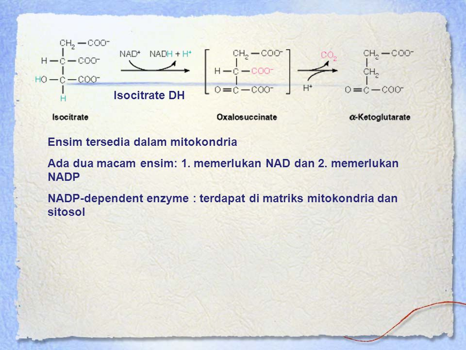 Isocitrate DH Ensim tersedia dalam mitokondria. Ada dua macam ensim: 1. memerlukan NAD dan 2. memerlukan NADP.
