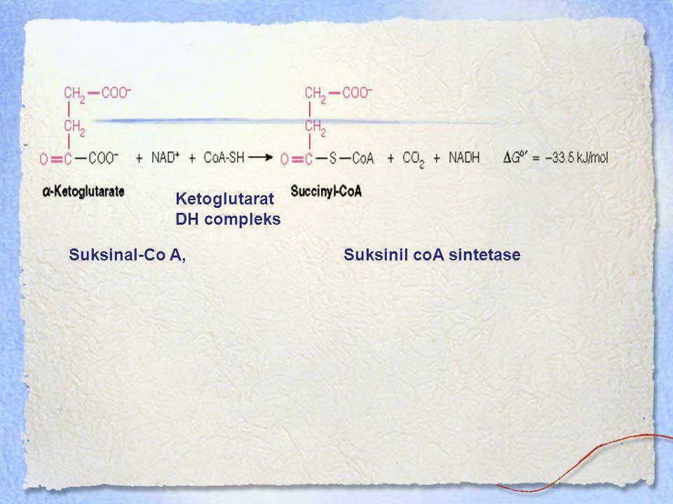 Ketoglutarat DH compleks
