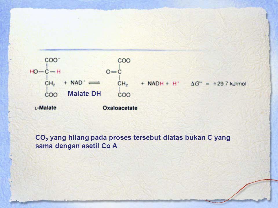 Malate DH CO2 yang hilang pada proses tersebut diatas bukan C yang sama dengan asetil Co A