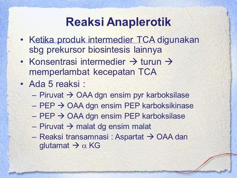 Reaksi Anaplerotik Ketika produk intermedier TCA digunakan sbg prekursor biosintesis lainnya.