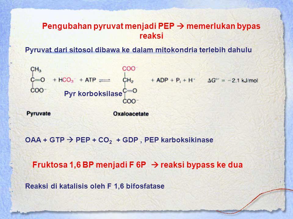 Pengubahan pyruvat menjadi PEP  memerlukan bypas reaksi