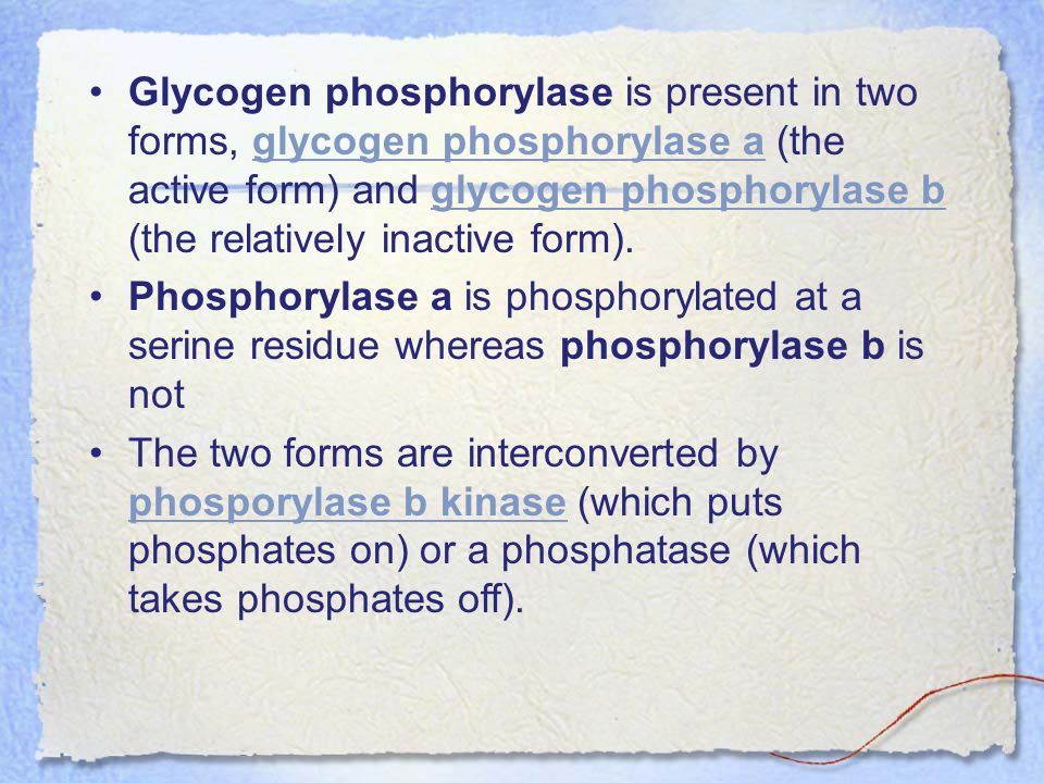 Glycogen phosphorylase is present in two forms, glycogen phosphorylase a (the active form) and glycogen phosphorylase b (the relatively inactive form).