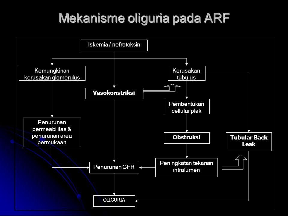 Mekanisme oliguria pada ARF