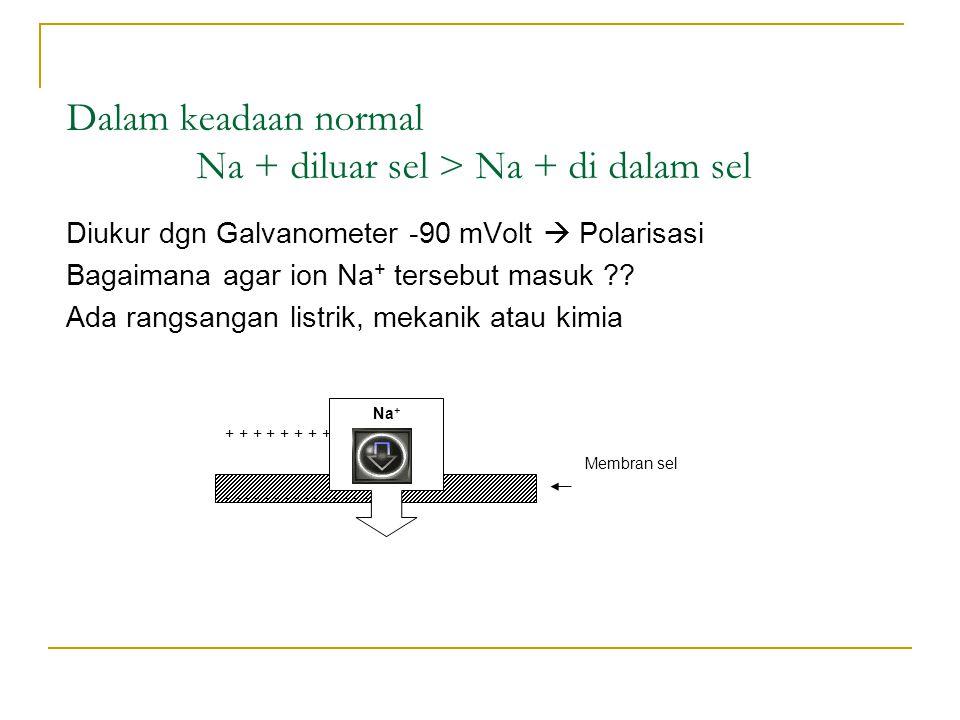 Dalam keadaan normal Na + diluar sel > Na + di dalam sel