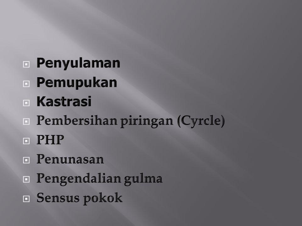 Penyulaman Pemupukan. Kastrasi. Pembersihan piringan (Cyrcle) PHP. Penunasan. Pengendalian gulma.