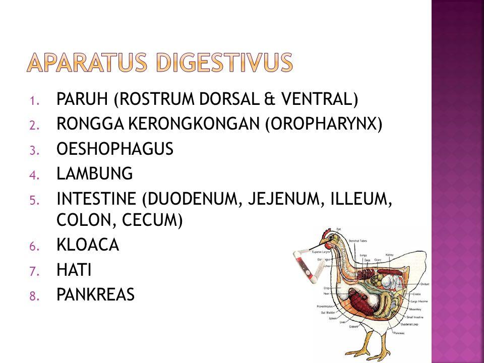 APARATUS DIGESTIVUS PARUH (ROSTRUM DORSAL & VENTRAL)