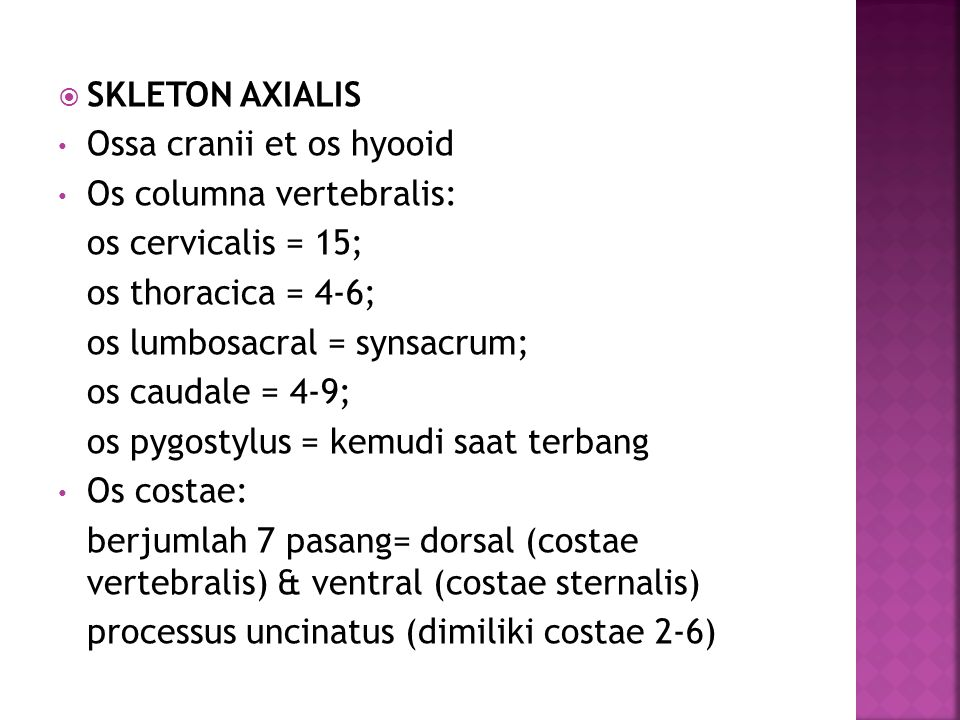 SKLETON AXIALIS Ossa cranii et os hyooid. Os columna vertebralis: os cervicalis = 15; os thoracica = 4-6;