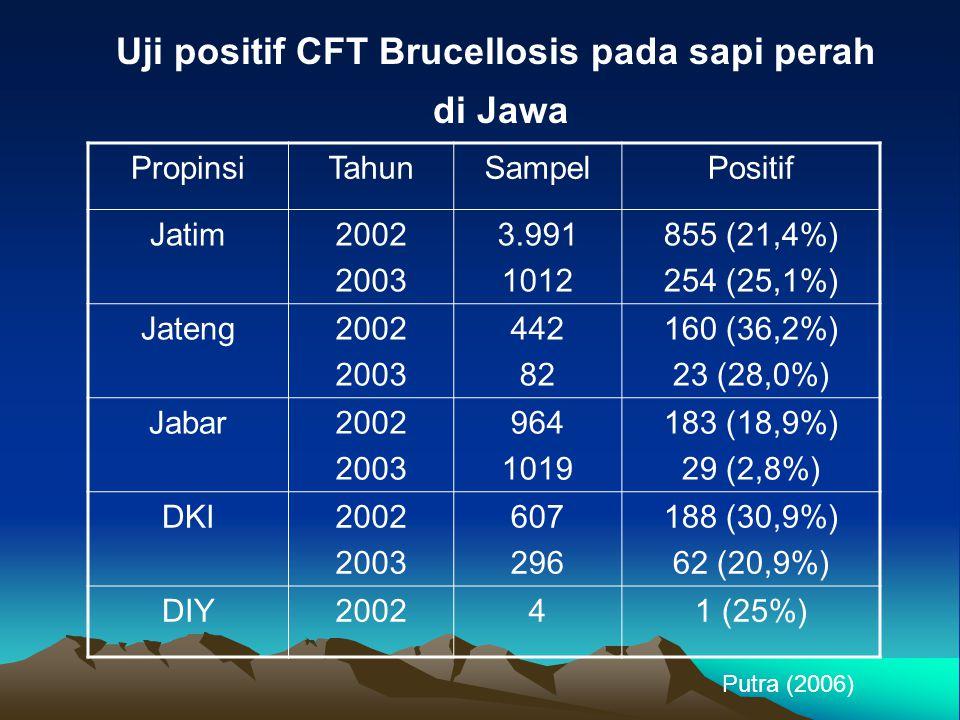 Uji positif CFT Brucellosis pada sapi perah