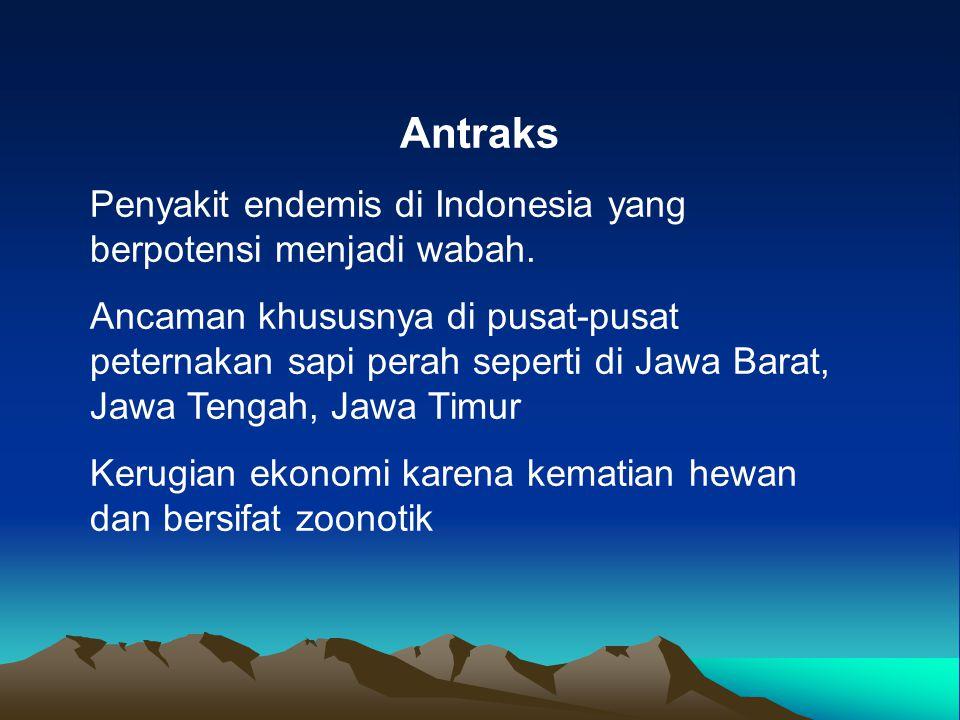 Antraks Penyakit endemis di Indonesia yang berpotensi menjadi wabah.