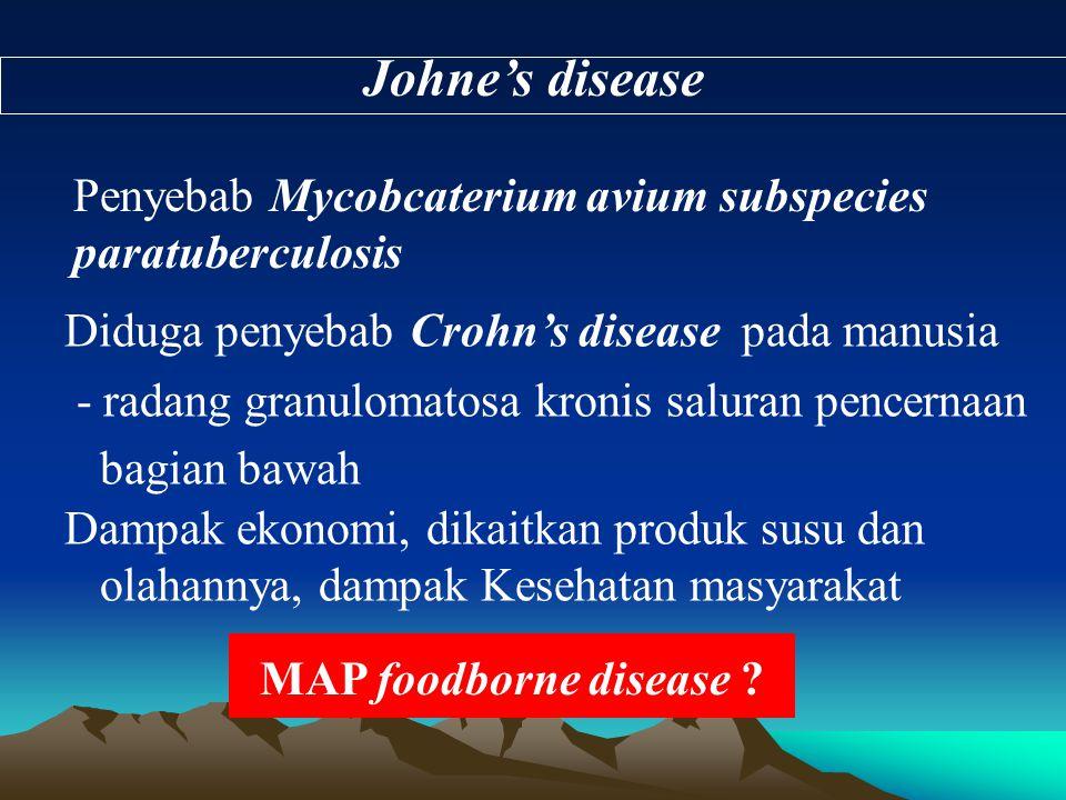 Johne's disease Penyebab Mycobcaterium avium subspecies paratuberculosis. Diduga penyebab Crohn's disease pada manusia.