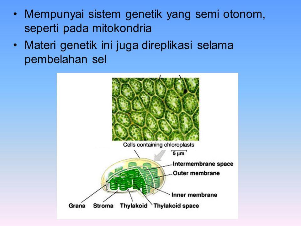 Mempunyai sistem genetik yang semi otonom, seperti pada mitokondria