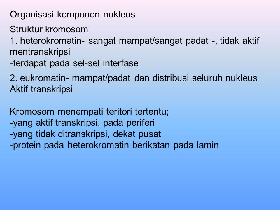 Organisasi komponen nukleus