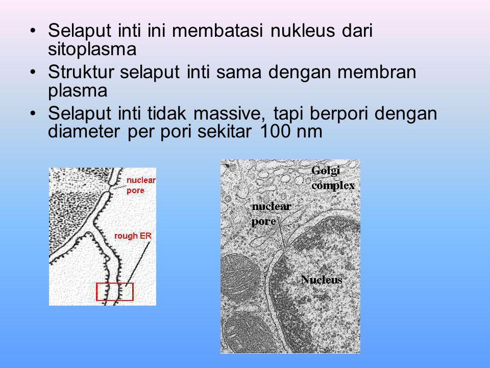 Selaput inti ini membatasi nukleus dari sitoplasma