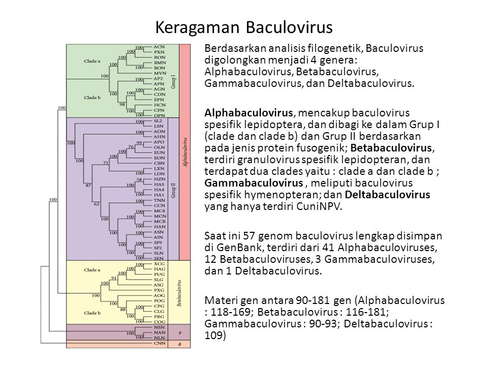 Keragaman Baculovirus