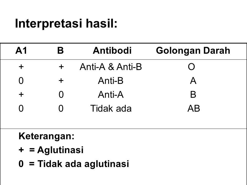 Interpretasi hasil: A1 B Antibodi Golongan Darah + + Anti-A & Anti-B O