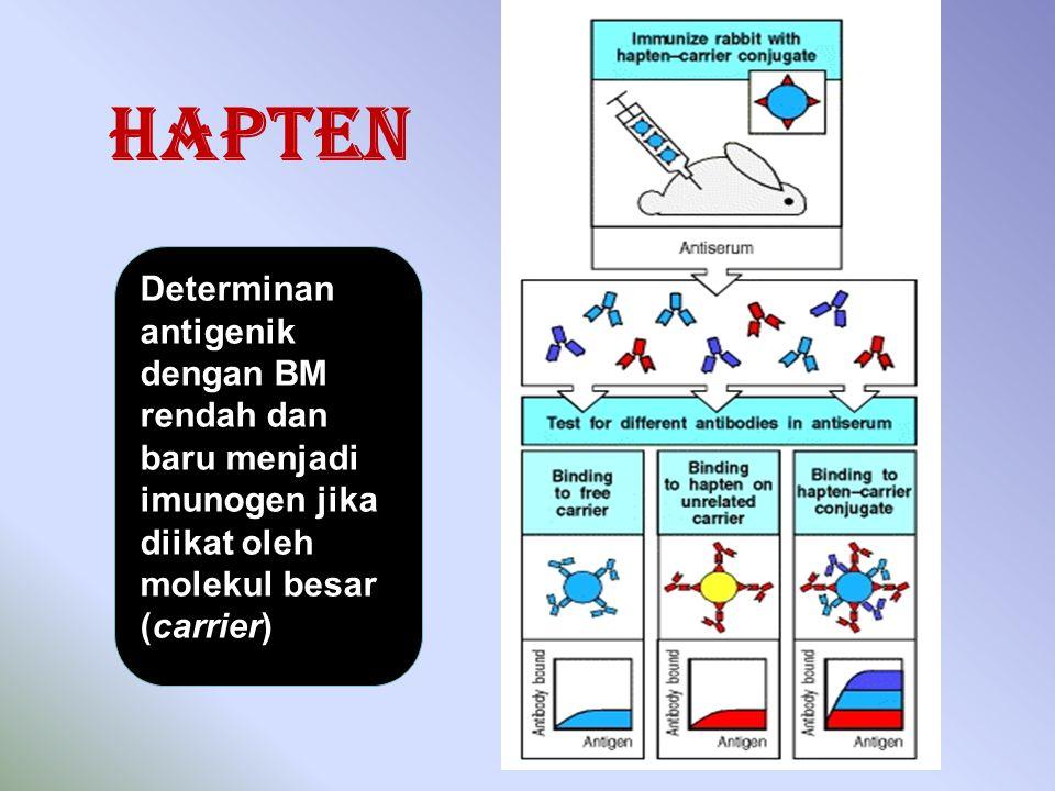 Hapten Determinan antigenik dengan BM rendah dan baru menjadi imunogen jika diikat oleh molekul besar (carrier)
