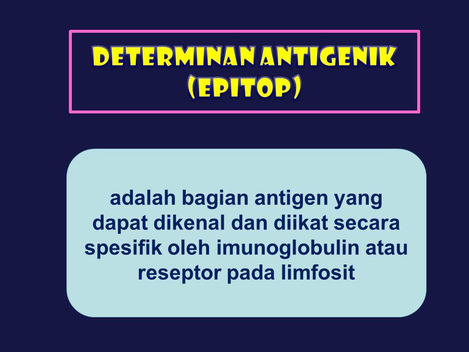 Determinan antigenik (epitop)