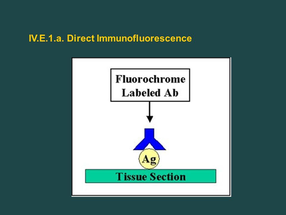 IV.E.1.a. Direct Immunofluorescence