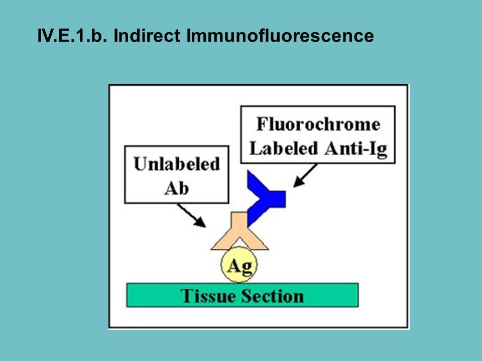 IV.E.1.b. Indirect Immunofluorescence