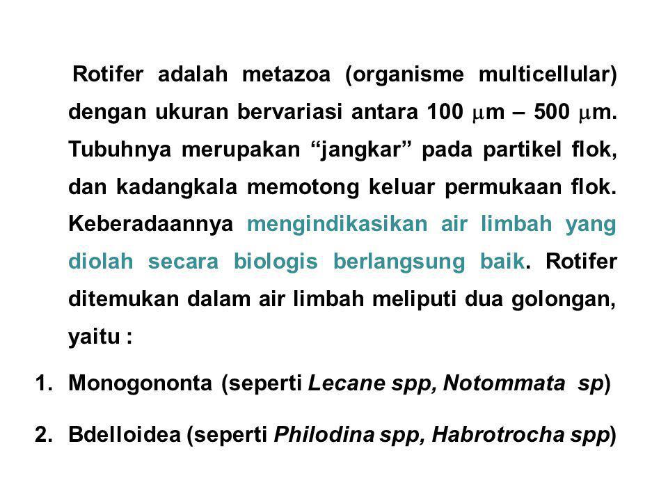 Rotifer adalah metazoa (organisme multicellular) dengan ukuran bervariasi antara 100 m – 500 m. Tubuhnya merupakan jangkar pada partikel flok, dan kadangkala memotong keluar permukaan flok. Keberadaannya mengindikasikan air limbah yang diolah secara biologis berlangsung baik. Rotifer ditemukan dalam air limbah meliputi dua golongan, yaitu :
