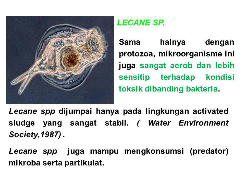 LECANE SP. Sama halnya dengan protozoa, mikroorganisme ini juga sangat aerob dan lebih sensitip terhadap kondisi toksik dibanding bakteria.