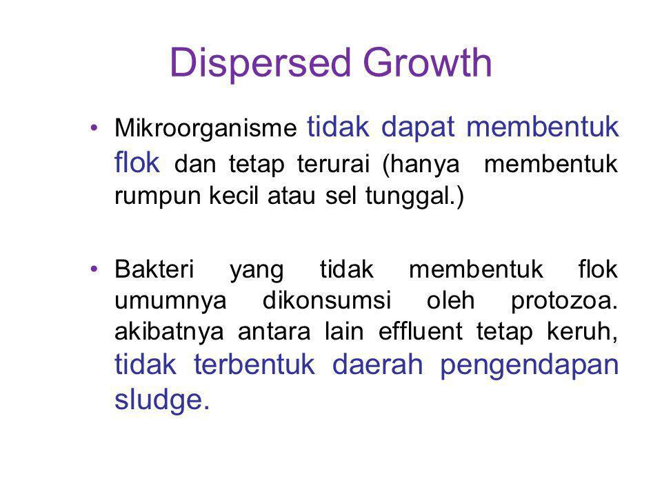 Dispersed Growth Mikroorganisme tidak dapat membentuk flok dan tetap terurai (hanya membentuk rumpun kecil atau sel tunggal.)