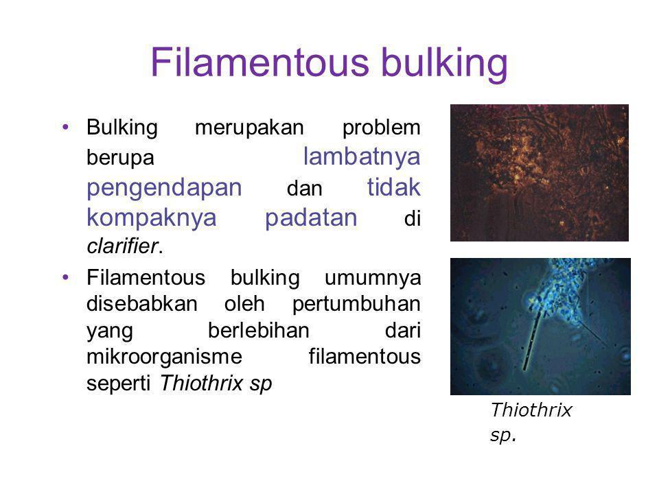 Filamentous bulking Bulking merupakan problem berupa lambatnya pengendapan dan tidak kompaknya padatan di clarifier.
