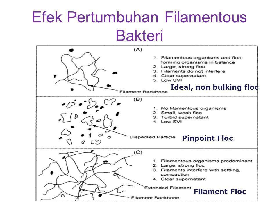 Efek Pertumbuhan Filamentous Bakteri