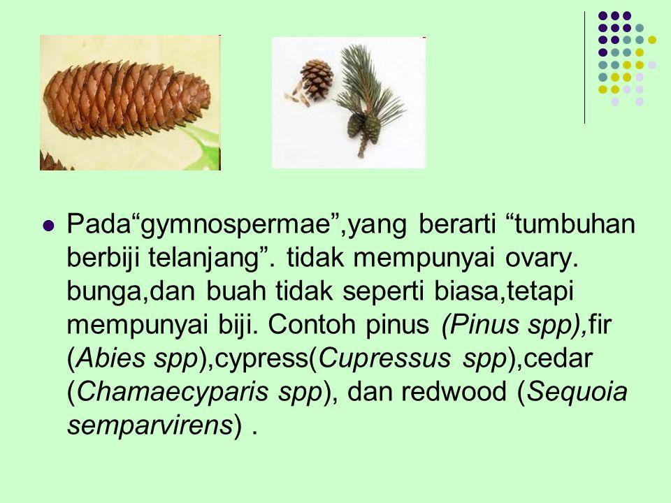 Pada gymnospermae ,yang berarti tumbuhan berbiji telanjang